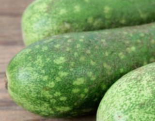 Analysing Ash Gourd (Winter Melon / Kohla)