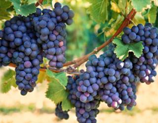 No grappling with grapes!